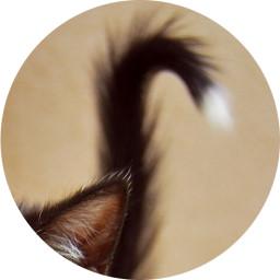 Czarny koci ogonek z białą końcówką.