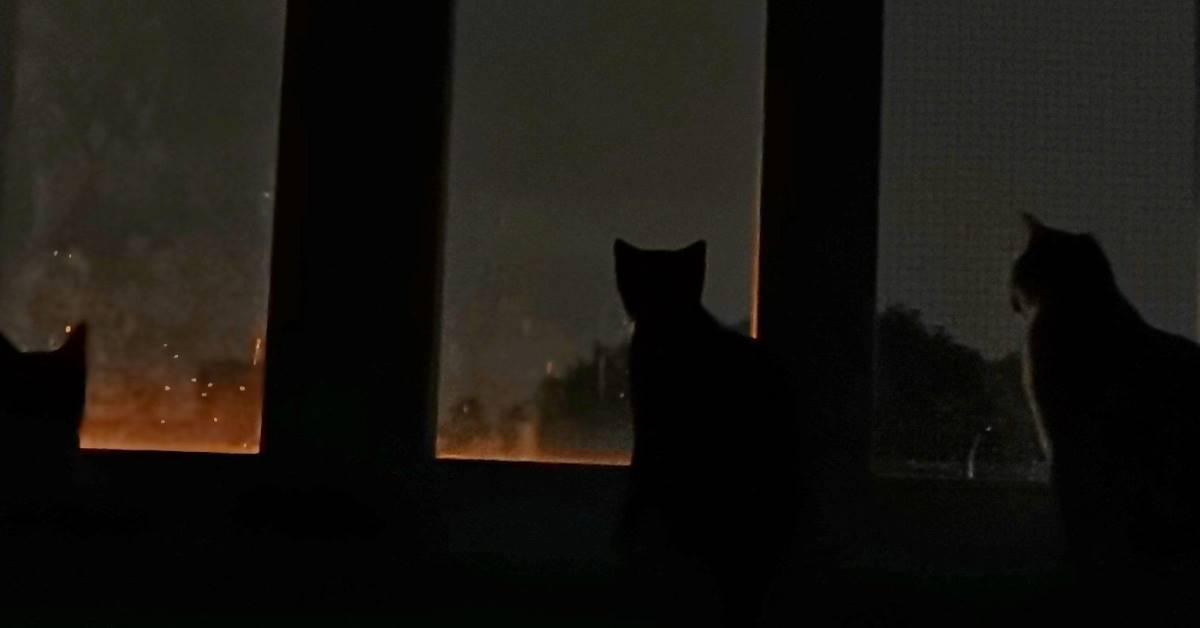 Trzy koty wyglądają przez okno w nocy.