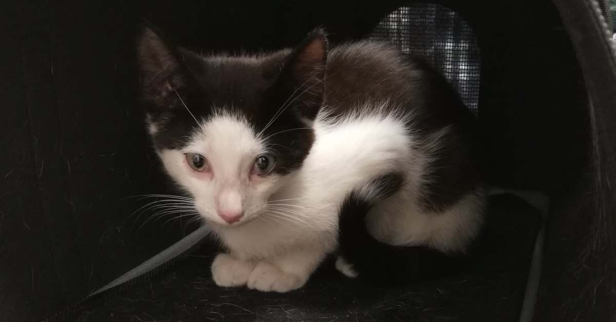 Kot środowiskowy Kizio na leczeniu.