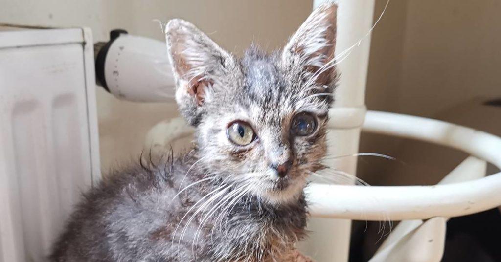 Mała kotka Aliama, która nie rośnie.