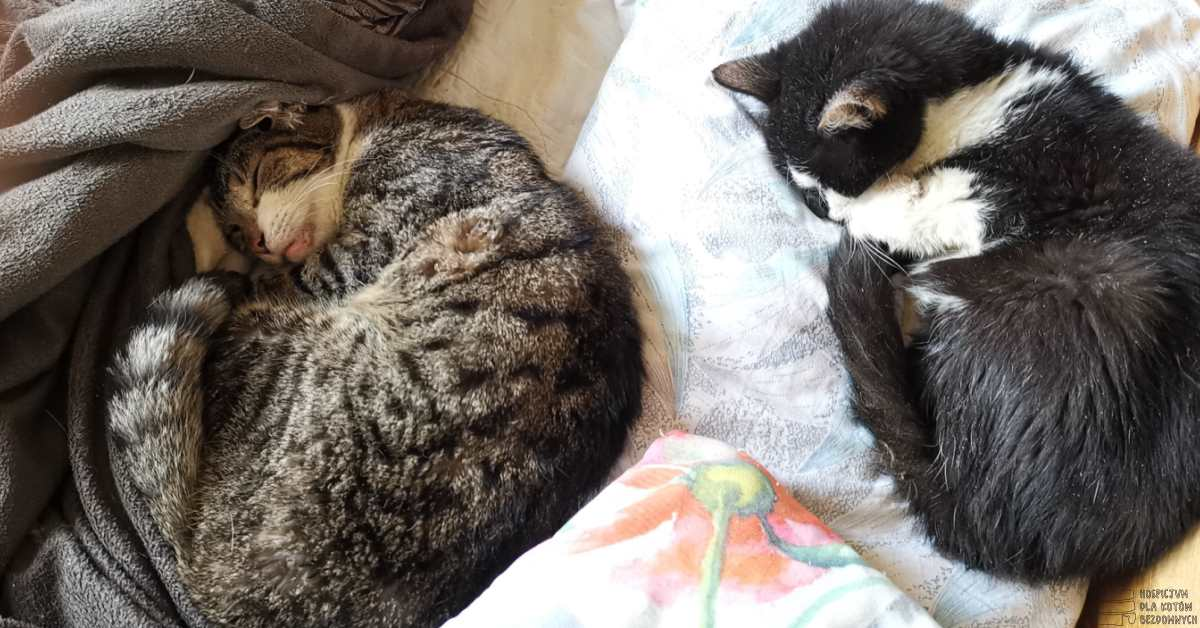 Dwa śpiące koty zwinięte w kłębek.