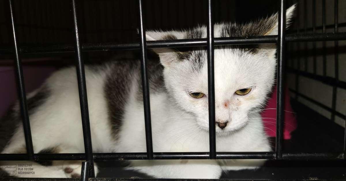 Kot Roni w kennelu.
