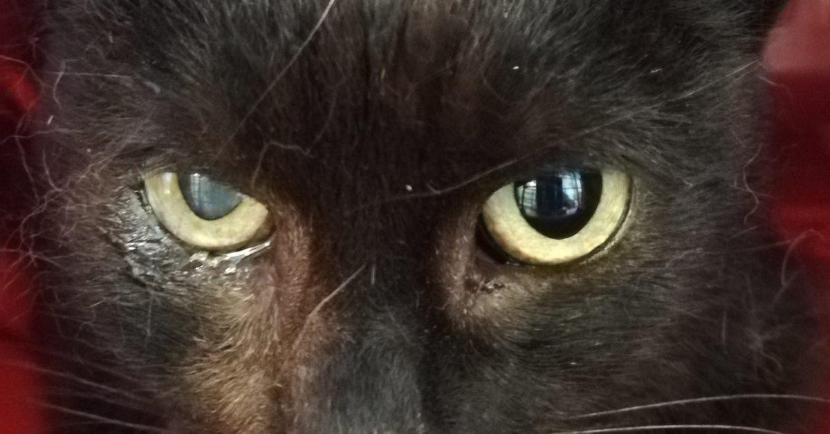 Oczy czarnej kotki, Katriny.