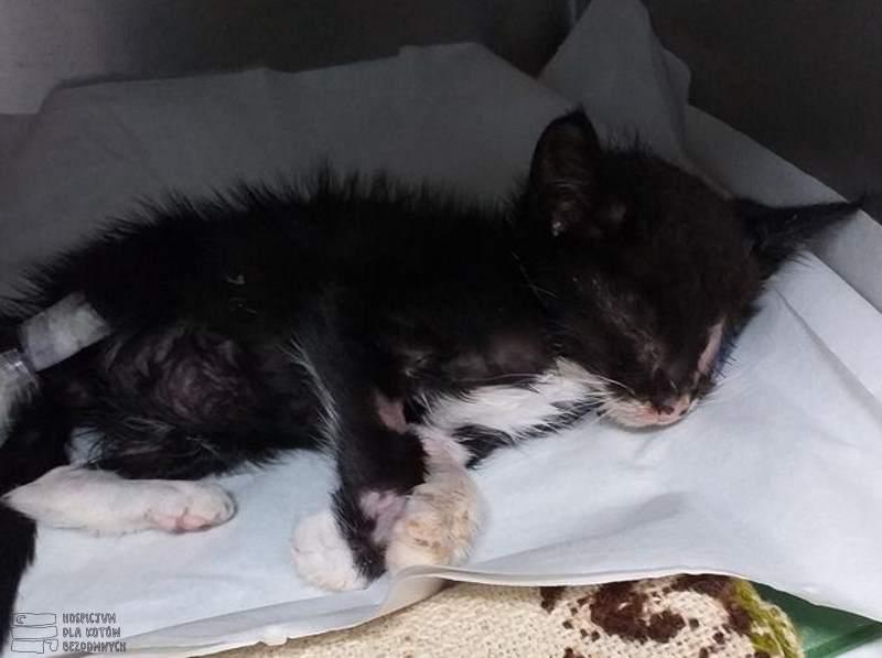 Mały kot Ratnik w lecznicy.