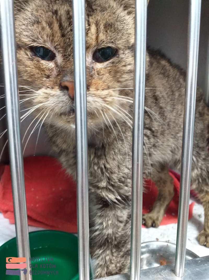 Bezdomny stary kot o imieniu Pan Miziasty